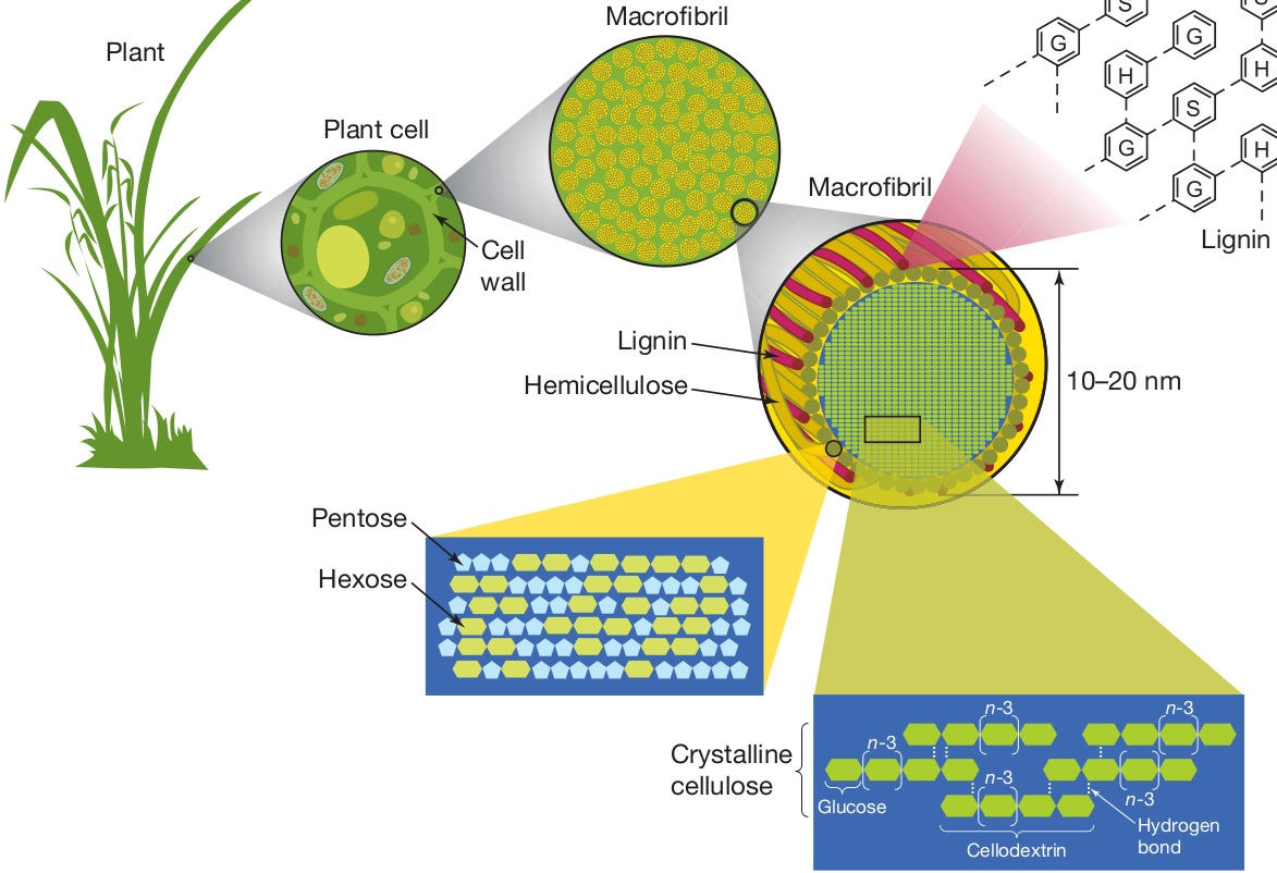 Plant Chemical Components : Plant cell wall lignin